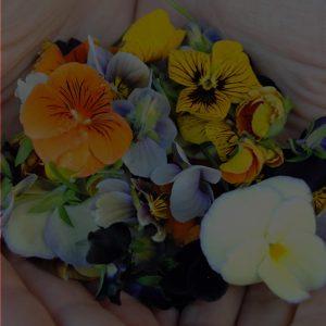 Floral Flavours